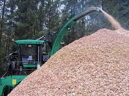 Lesni sekanci pomagajo v kmetijstvu: izboljšujejo kakovost zemlje in vode
